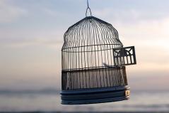 open-bird-cage